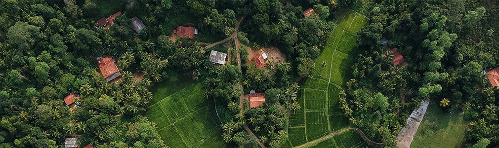 The countryside in Sri Lanka